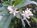 LOVE NARANJAS (Naranjas y Mandarinas de Valencia) - Foto 1