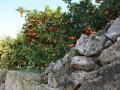 LOVE NARANJAS (Naranjas y Mandarinas de Valencia) - Foto 3