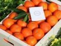 LOVE NARANJAS (Naranjas y Mandarinas de Valencia) - Foto 4