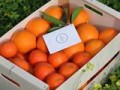 LOVE NARANJAS (Naranjas y Mandarinas de Valencia) - Foto 5
