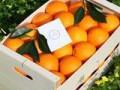 LOVE NARANJAS (Naranjas y Mandarinas de Valencia) - Foto 6