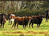AGROTURISMO PERLAKUA SAKA (Itziar - Deba - Gipuzkoa) - Foto 5
